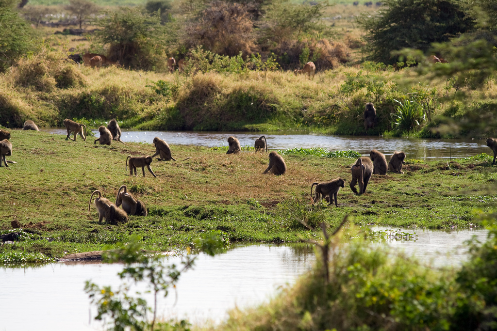Lake Manyara National Park Tours 3
