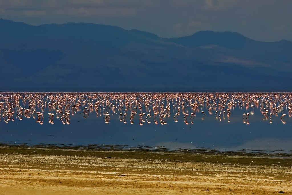 Lake Manyara National Park Tours 2
