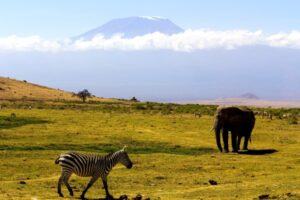 elephant-and-zebra-with-the-kilimanjaro-at-the-bac-2021-04-06-04-18-33-utc (Custom)-min (Custom)