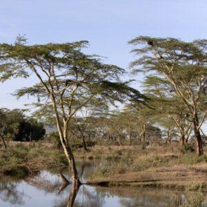 seronera-river-serengeti-national-park-tanzania-africa (Custom)-min (Custom)